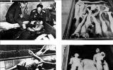 纳粹羞辱残杀妇女 女人尸体成堆太可怕